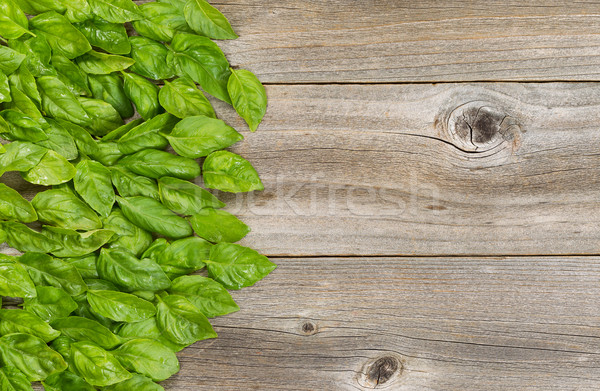 Collection of fresh large basil leafs on aged wooded table Stock photo © tab62