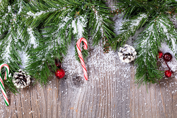 Sempre-viva ramo dicas coberto neve Foto stock © tab62