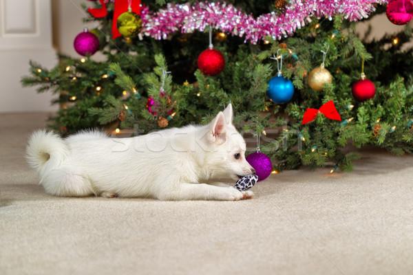 幸せ 子犬 犬 演奏 クリスマス おもちゃ ストックフォト © tab62