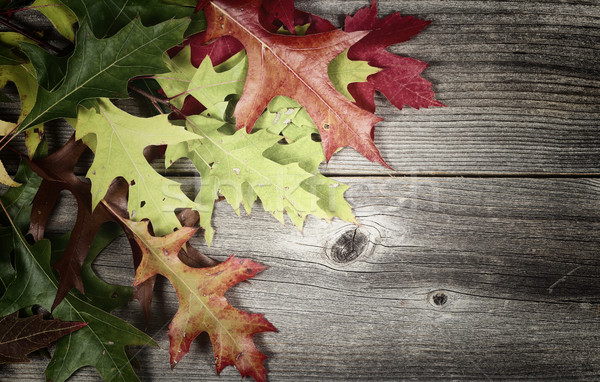 Fading autumn Leaves on Age Wood  Stock photo © tab62