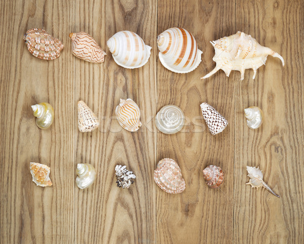 Assorted Seashells on Aged Wood  Stock photo © tab62
