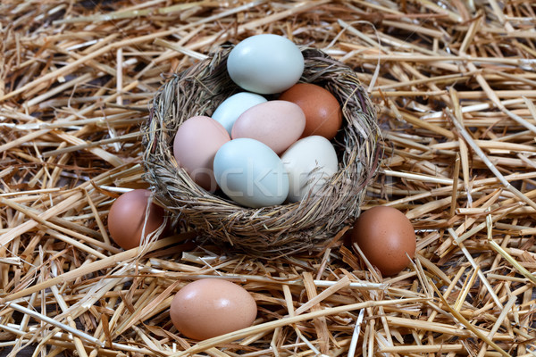 Naturally colorful eggs in bird nest for Easter holiday backgrou Stock photo © tab62