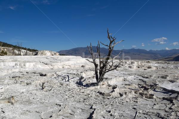 枯れ木 公園 ホット 水平な 画像 立って ストックフォト © tab62
