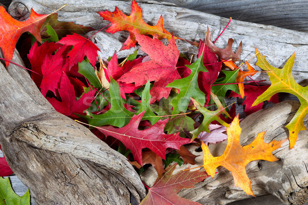 Autumn Leaves on Driftwood  Stock photo © tab62