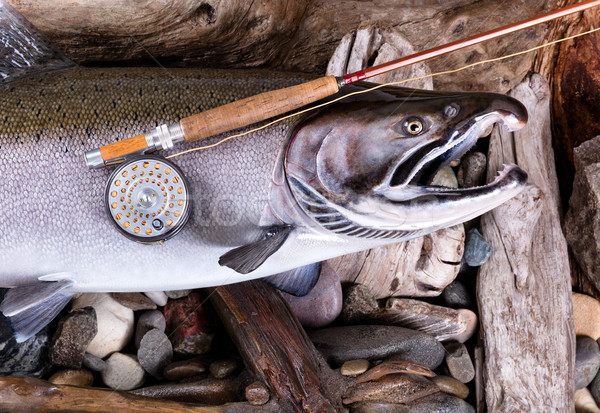 Vintage fly fishing equipment on large trout in riverbed setting Stock photo © tab62