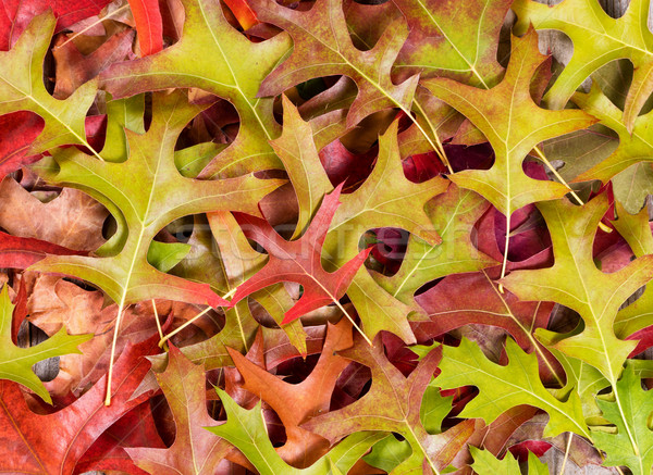 Wcześnie ramki układ charakter liści Zdjęcia stock © tab62