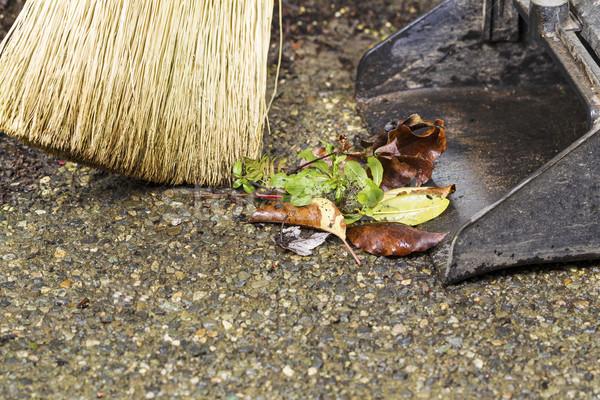 Sweeping weeds into dusk pan  Stock photo © tab62