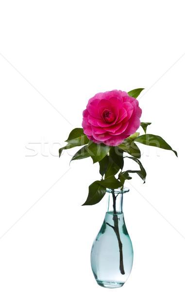 ワシントン 花 ネイティブ フル 咲く 青 ストックフォト © tab62