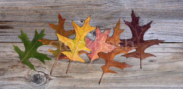 Real autumn leafs changing their colors on rustic wooden boards Stock photo © tab62