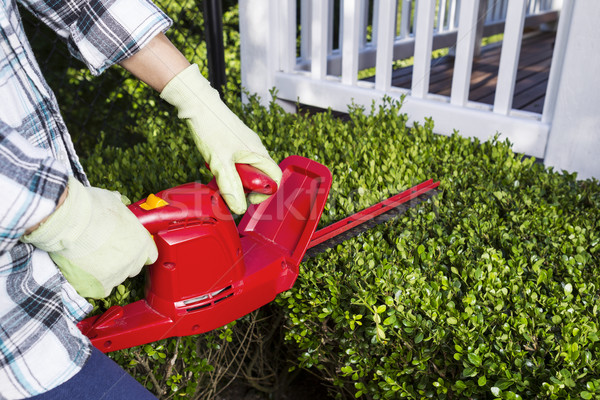 Woman using electrical power trimmer to cut bushes  Stock photo © tab62