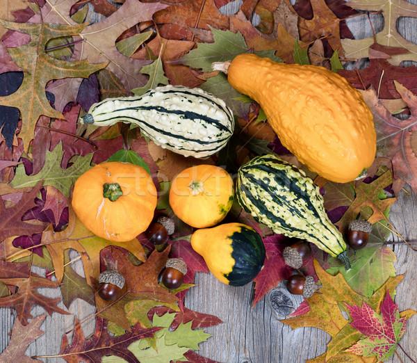 реальный осень листьев желудь украшения Сток-фото © tab62