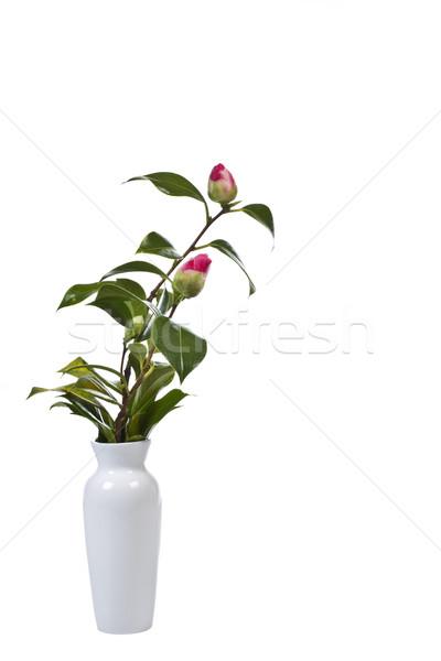 Budding Flowers Stock photo © tab62