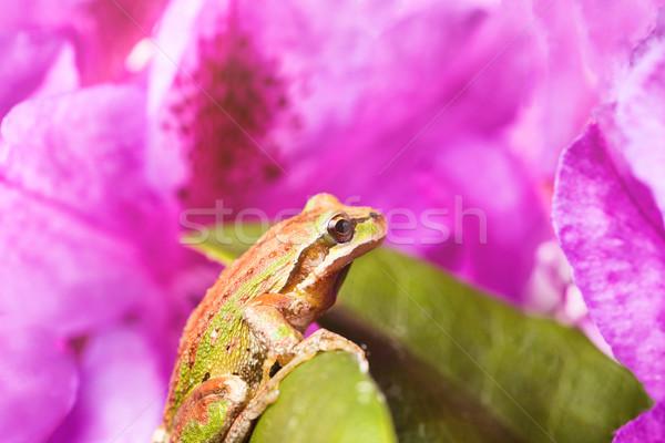 Voorjaar kikker binnenkant heldere daglicht Stockfoto © tab62