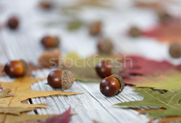 ősz makk közelkép szezonális lomb ünnepek Stock fotó © tab62