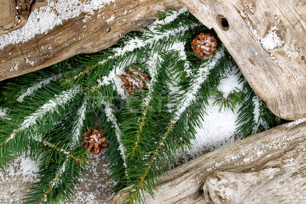 Evergreen branches and rustic driftwood covered with snow Stock photo © tab62