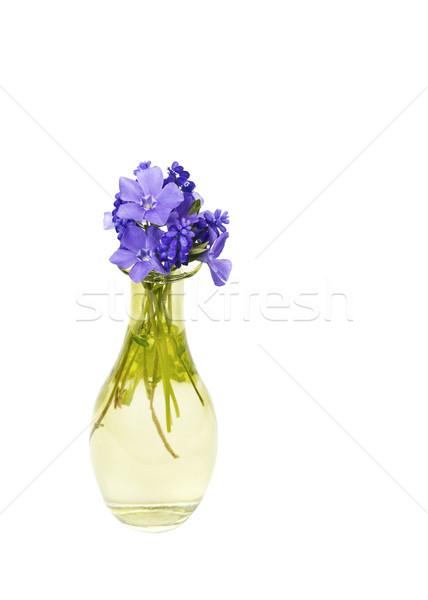 Poder pequeno roxo flores florescer Foto stock © tab62