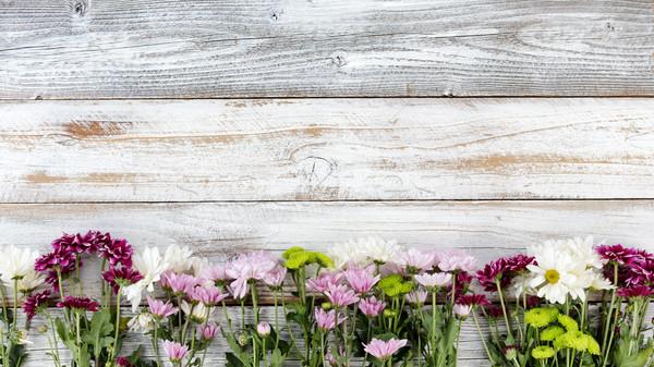 Misto flores fundo fronteira branco resistiu Foto stock © tab62