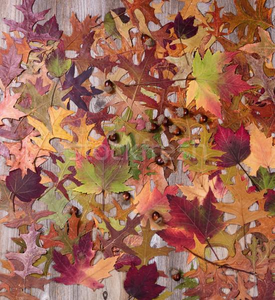 осень листва деревенский древесины Сток-фото © tab62