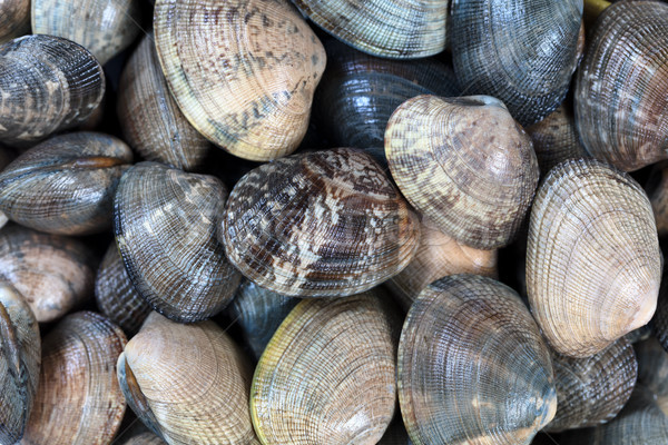 Fresh live clams in full frame format background  Stock photo © tab62