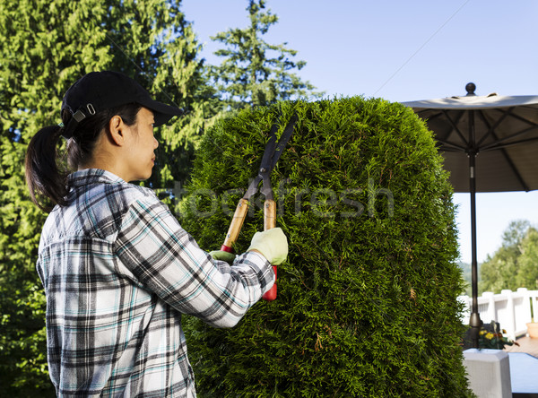 Mature woman Trimming the Hedges near her patio  Stock photo © tab62