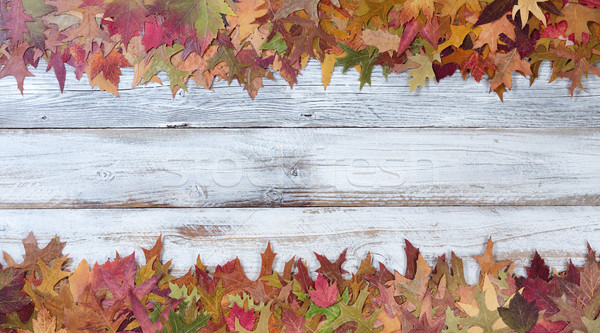 Top and bottom borders of Autumn Seasonal Leaf Decorations  Stock photo © tab62