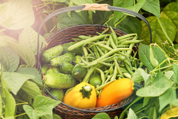 Healthy basket of vegetables during bright day in field   Stock photo © tab62