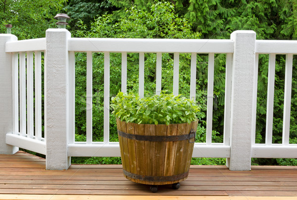 Seasonal basil plants on cedar outdoor deck  Stock photo © tab62