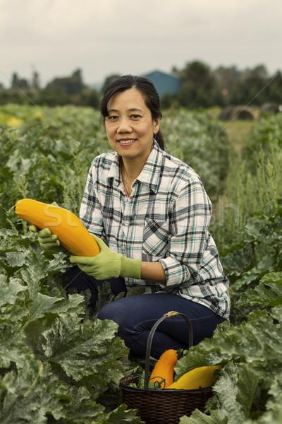 秋 野菜 収穫 成熟した 女性 収穫 ストックフォト © tab62