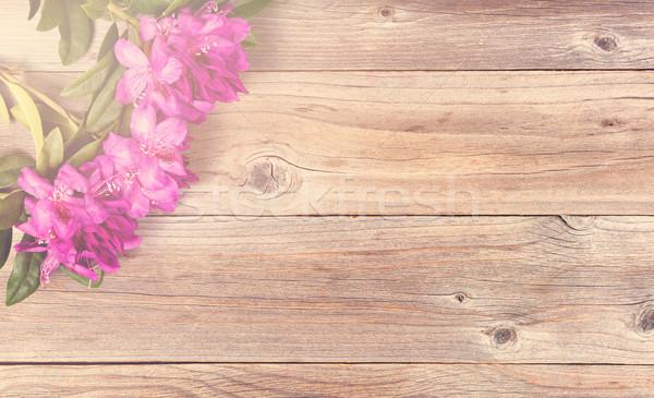 Heldere daglicht vallen bloemen wild Stockfoto © tab62