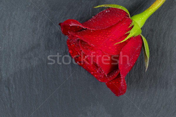 Happy Valentines day with single cut red rose on natural slate Stock photo © tab62