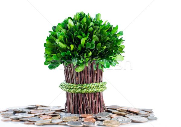 ストックフォト: 金のなる木 · 孤立した · 白 · 小 · 工場