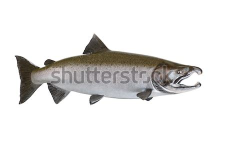 Large Salmon isolated on white background  Stock photo © tab62