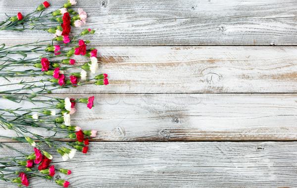 красочный гвоздика цветы границе белый выветрившийся Сток-фото © tab62