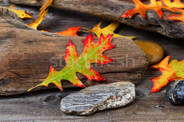 Autumn Oak Leaf on aged Driftwood  Stock photo © tab62