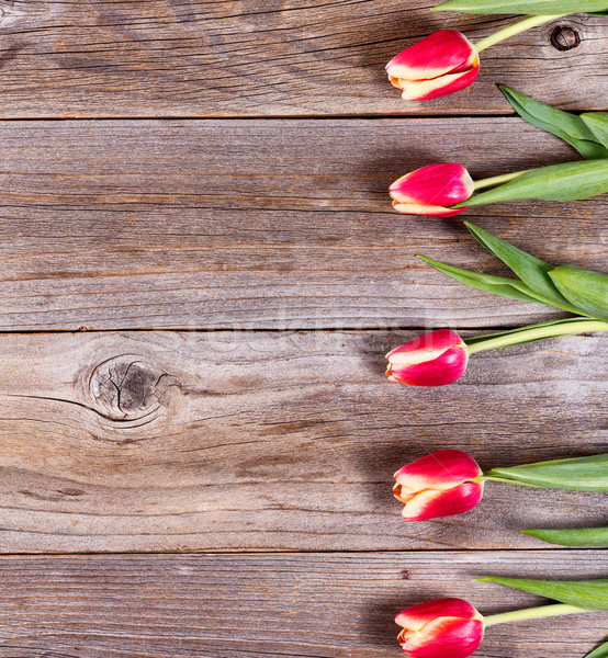 Lovely tulips on stressed wood Stock photo © tab62