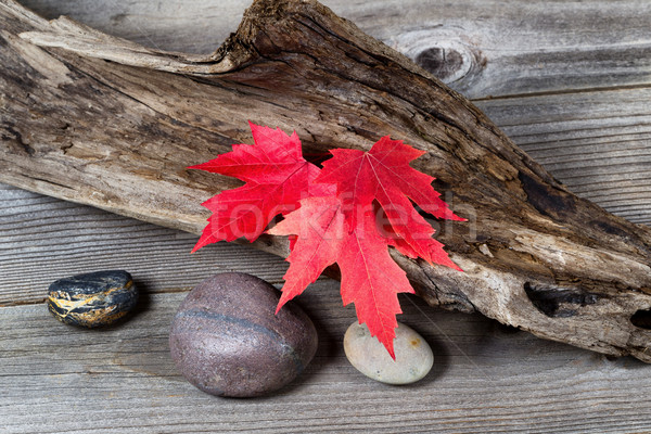 Autumn Red Maple Leaves on Driftwood  Stock photo © tab62