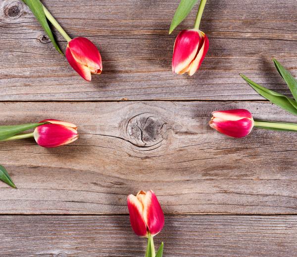 Kółko tulipany drewna rustykalny granicy Zdjęcia stock © tab62