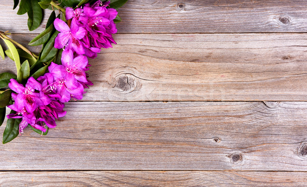 Seasonal wild rhododendron flowers on rustic wooden boards  Stock photo © tab62