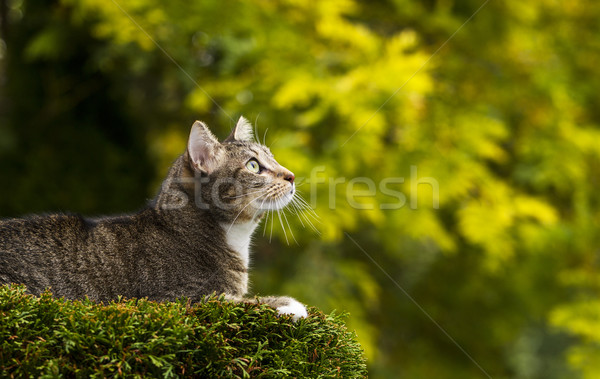 Cat on Top of Tree Hunting Stock photo © tab62