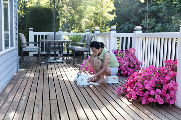 Woman grooming her dog while outdoors on home deck during summer Stock photo © tab62
