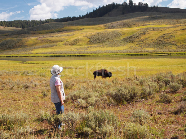 Stock photo: Woman watching a North American Buffalo Grazing in Field with ri