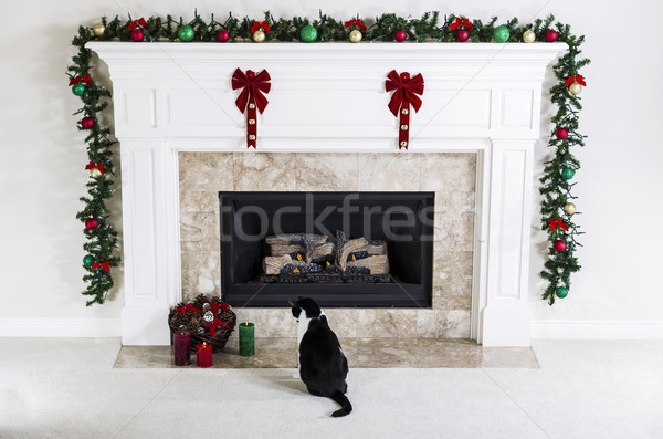 Christmas Kitty  Stock photo © tab62