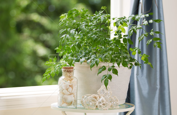 Home Plant and Decorations in front of Open Windows on Nice Day  Stock photo © tab62