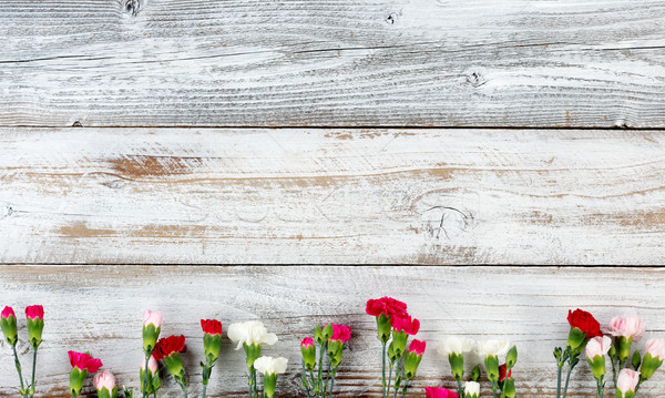 Colorful carnation flower bottom border on white weathered woode Stock photo © tab62