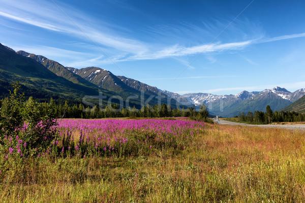 Vad virágok hegyek erdő mező égbolt szelektív fókusz Stock fotó © tab62