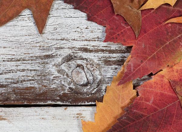 Seasonal Autumn foliage on rustic white wooden boards  Stock photo © tab62