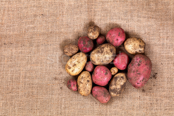 Raw uncleaned potatoes on burlap cloth Stock photo © tab62