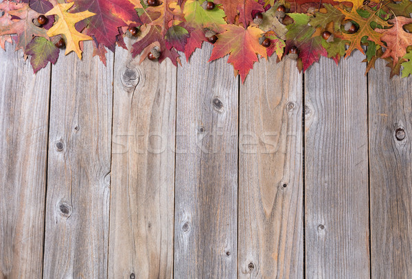 Top Border of vibrant autumn foliage and acorns on rustic wooden Stock photo © tab62