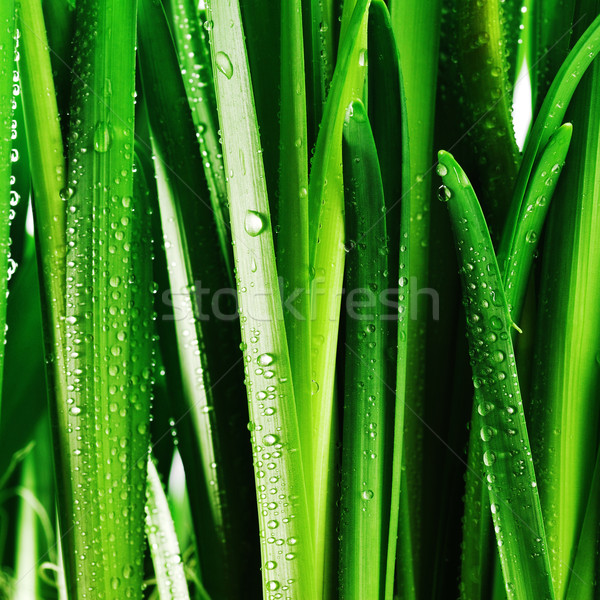 Droplets on green leaves Stock photo © taden