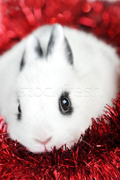 Tavşan çelenk küçük güzel kırmızı yalıtılmış Stok fotoğraf © taden